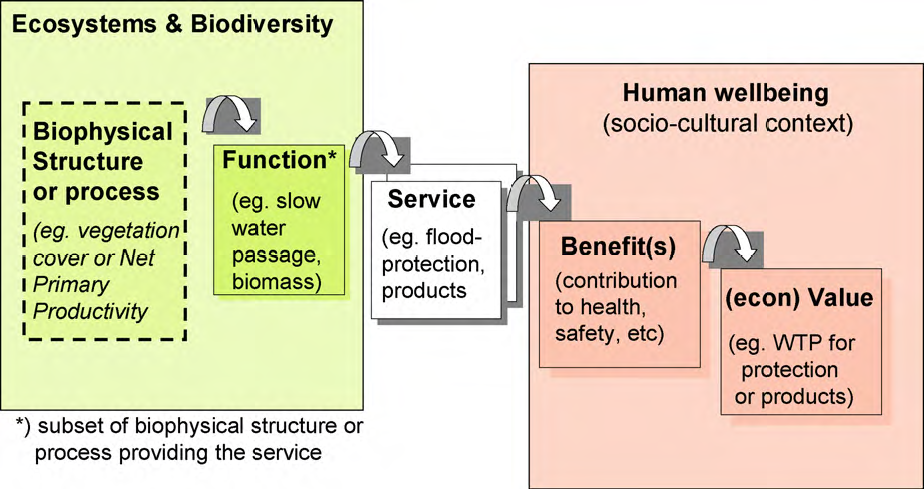 ecosystems and biodiversity essay How do ecosystems function when there is low biodiversity versus when there is high biodiversity why does costa rica have high biodiversity.