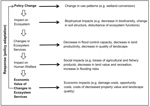 The pathway from policy change to socio-economic impacts.png