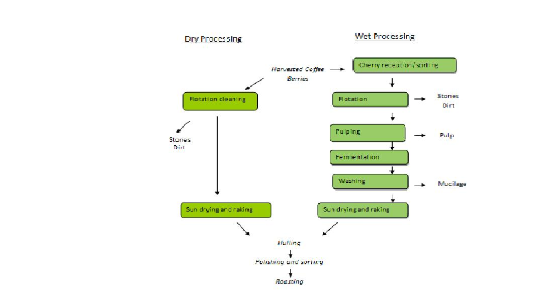 Dry and wet coffee processing methods